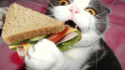 Sandwichs.... amusants ! Ptdr