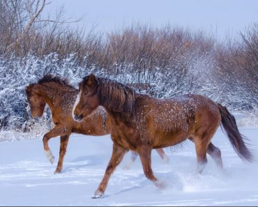 animaux, nature, neige, chevaux, hiver, paysage