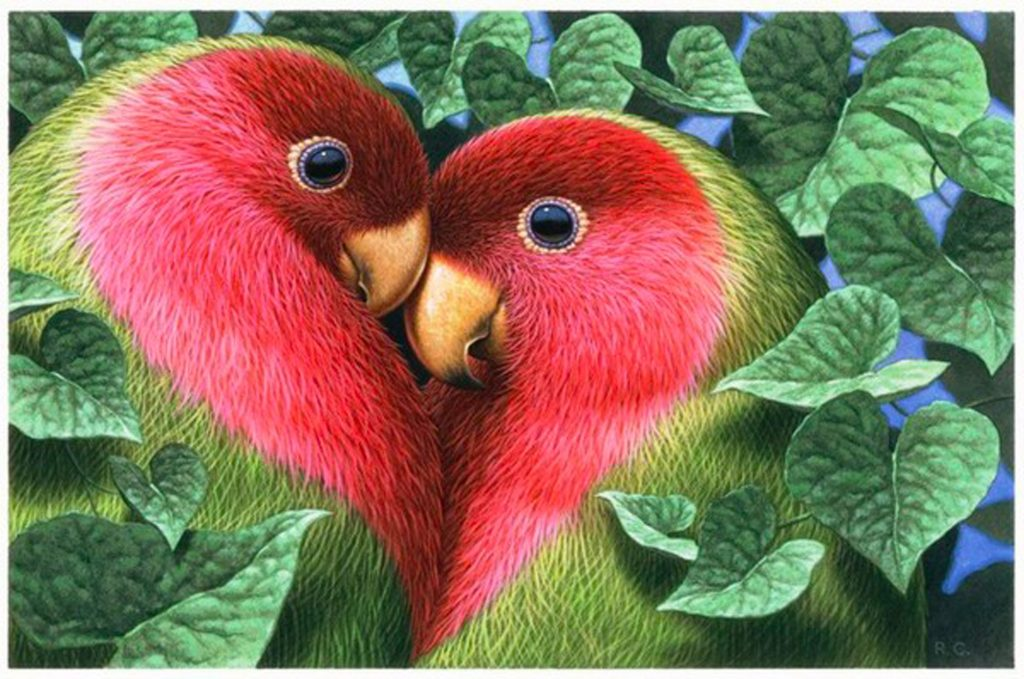 Love Birds Hd Wallpapers And Images Free Download: Les Perroquets Amoureux